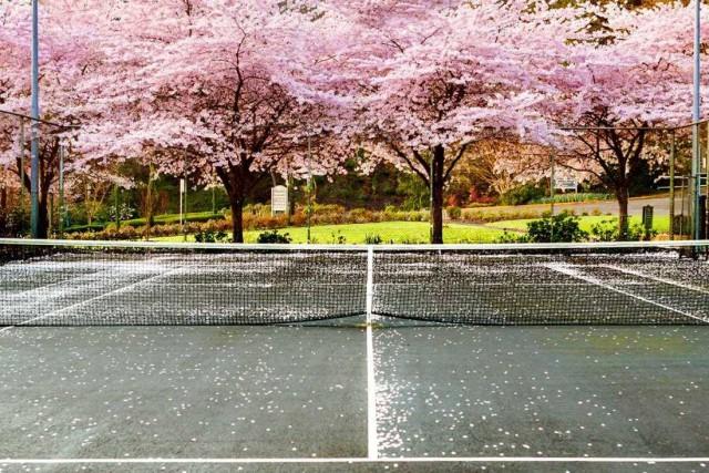 Washington Park Courts, Portland